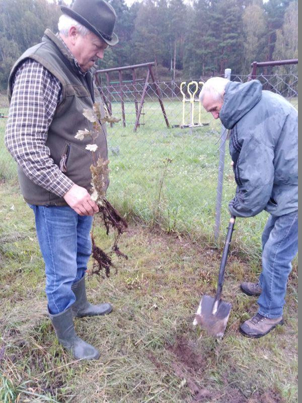 Sołtys Siekierek wraz z mieszkańcem wsi sadzi drzewko.