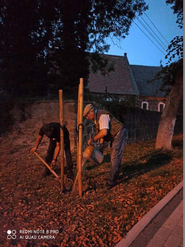 Sołtys Golic podlewa zasadzone drzewko.