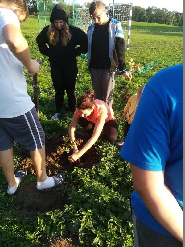 Mieszkańcy Radostowa wspólnie sadzą drzewka.