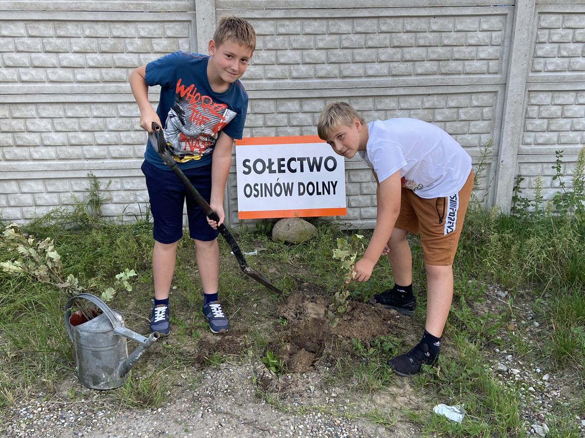 Chłopcy z sołectwa Osinów Dolny sadzą drzewka.
