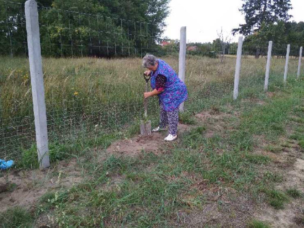 Mieszkanka sołectwa Piasek posadziła drzewko.
