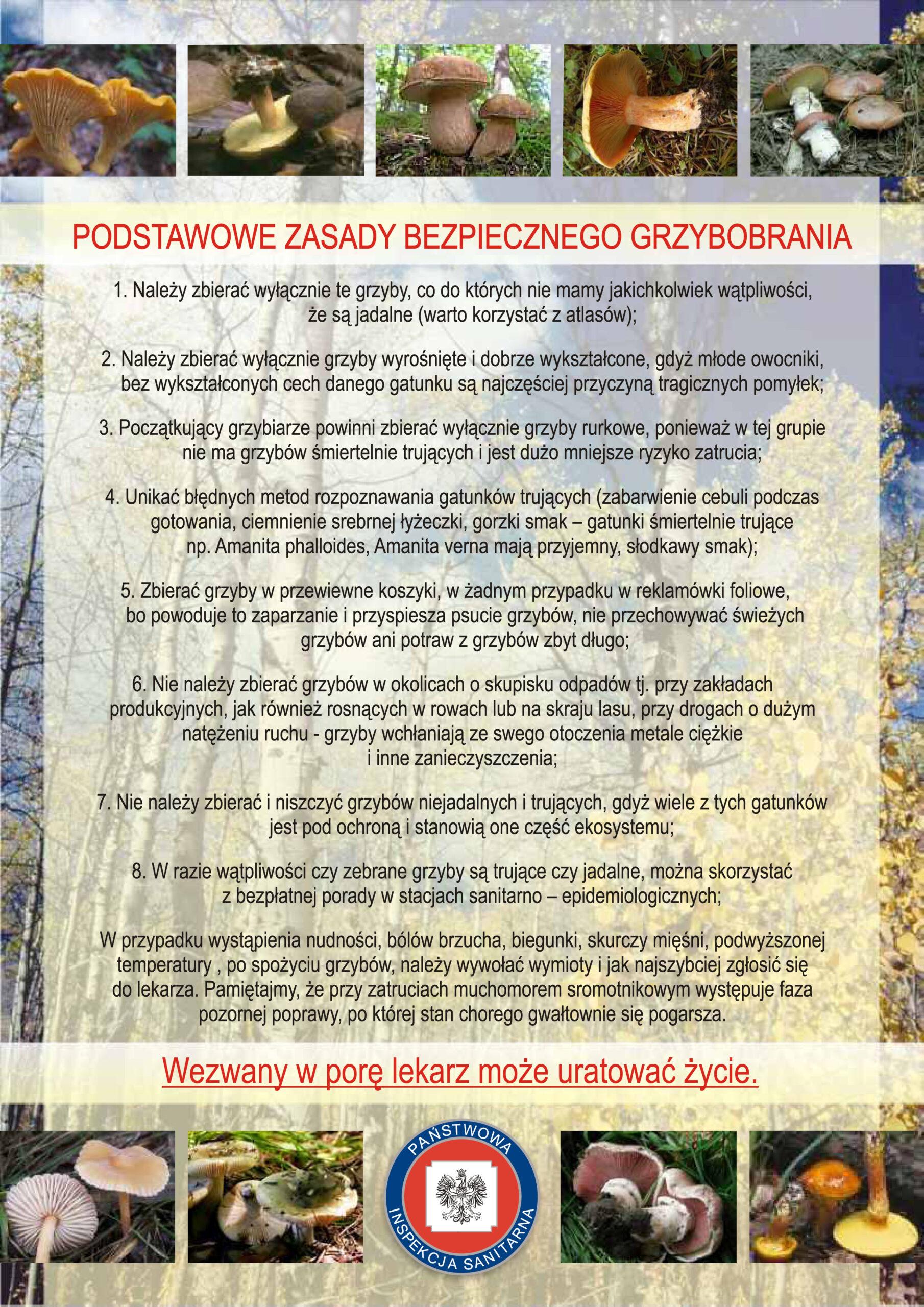 podstawowe-zasady-bezpiecznego-grzybobrania